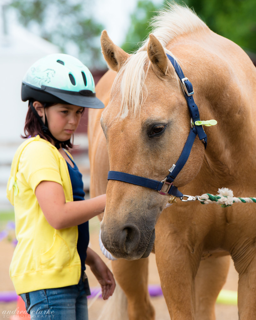 Learning with horses